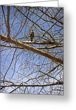 Nature In The Wild - Annoucing Spring Greeting Card