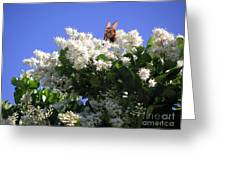Nature In The Wild - Bathing In Blooms Greeting Card