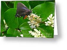 Nature In The Wild - Beautiful In Black Greeting Card