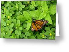Nature In The Wild - Beautiful Solitude Greeting Card