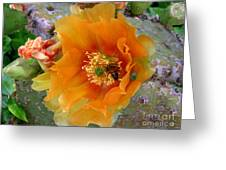 Nature In The Wild - Cactus Honey Greeting Card