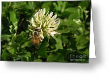 Nature In The Wild - Clover Honey Greeting Card