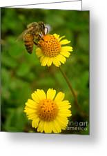 Nature In The Wild - Hanging In There Greeting Card