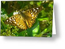 Nature In The Wild - Kaleidoscope Of Color Greeting Card