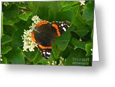 Nature In The Wild - Landing Perfectly Greeting Card