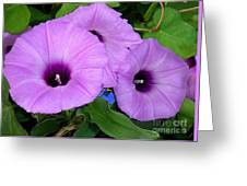 Nature In The Wild - Morning Bells Greeting Card