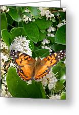 Nature In The Wild - On Golden Wings Greeting Card
