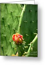 Nature In The Wild - Red Against Green Greeting Card