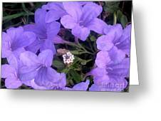 Nature In The Wild - Ring Around The Posy Greeting Card