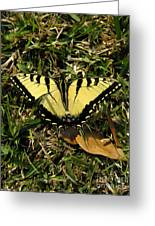 Nature In The Wild - Splendor In The Grass Greeting Card