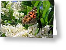Nature In The Wild - Stained Glass Greeting Card