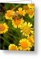Nature In The Wild - The Nectar Company Greeting Card