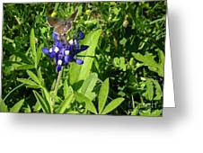 Nature In The Wild - Those Sweet Blues Greeting Card
