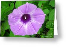 Nature In The Wild - Glory In Purple Greeting Card