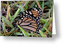 Nature In The Wild - Traveling Light Greeting Card