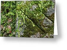 Nature - Living Retention Wall 1 Greeting Card