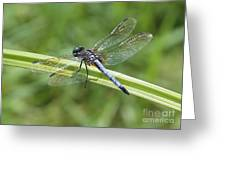 Nature Macro - Blue Dragonfly Greeting Card