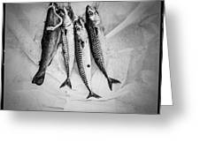 Nature Morte Dans Le Cuisine - Still Life In The Kitchen. Greeting Card