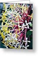 Nature Museum Botanical Greeting Card