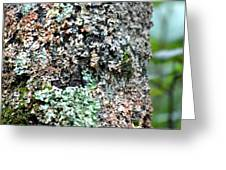 Nature Painted Tree Bark Greeting Card