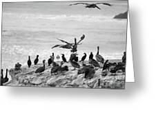 Nature Pelicans Rock  Greeting Card