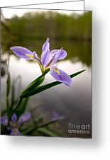 Nature Standing Greeting Card