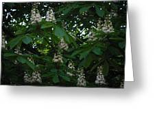 nature Ukraine blooming chestnuts Greeting Card