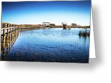Nature Walk Greeting Card by Gary Gillette