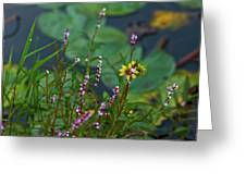 Nature Water Garden Greeting Card