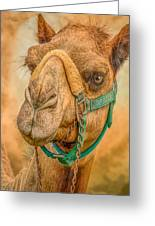 Nature Wear Camel Greeting Card