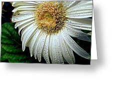 Nature When Wet Greeting Card