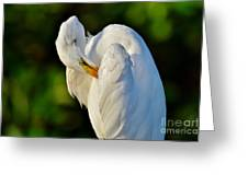 Natures Angel Greeting Card