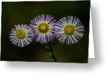 Nature's Asterisks Greeting Card