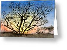 Natures Backlight Greeting Card