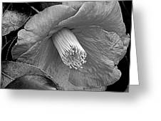Nature's Beauty In Black And White Greeting Card