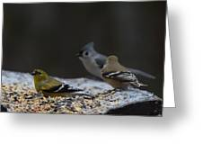 Natures Birds 59 Greeting Card