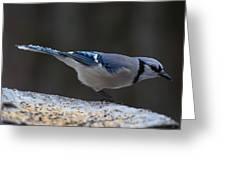 Natures Birds 65 Greeting Card