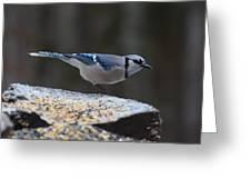Natures Birds 66 Greeting Card