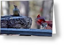 Natures Birds 68 Greeting Card