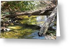 Nature's Bridge Greeting Card