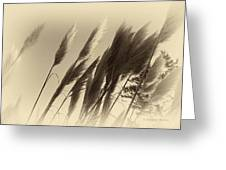 Natures Brushes Greeting Card