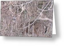 Nature's Camoflague Greeting Card