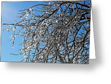Natures Crystal Greeting Card