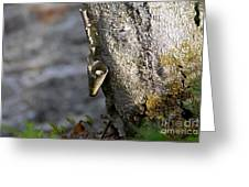 Nature's Detail Greeting Card