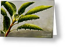Early Morning Raindrops Greeting Card