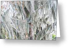 Natures Drapery At Okefenokee Swamp Greeting Card