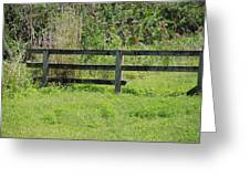 Natures Fence Greeting Card