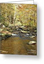 Nature's Finest 5 - Ricketts Glen Greeting Card