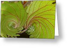 Nature's Fractals Greeting Card