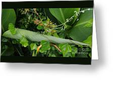 Nature's Gift Wrap Greeting Card